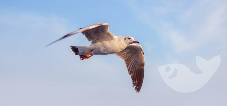 Möwe fliegt am blauen Himmel