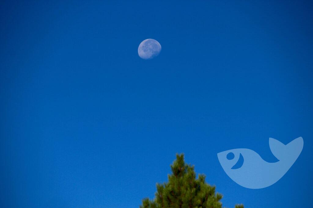 Mondlicht auf unserem Roadtrip durch den Westen der USA