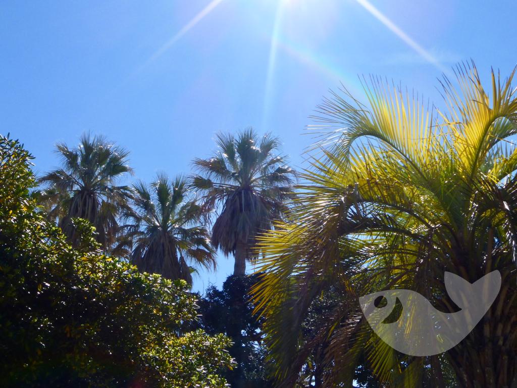 Botanischer Garten in Cádiz