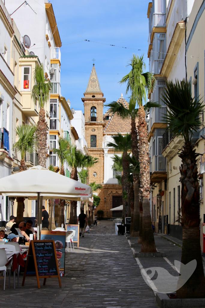 Palmengesäumte Calle Virgen de la Palma
