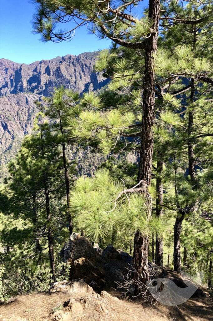 Blick auf die Caldera de Taburiente, Wanderweg La Cumbrecita