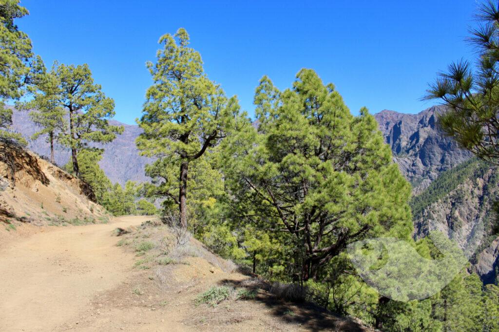 Auf dem Weg zum Lomo de las Chozas (ca. 1200m)